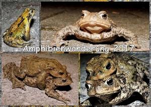 Amphibienwandeung 2017